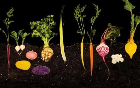 Nathan-Myhrvold-Photography-of-modernist-cuisine-vegetable-garden1