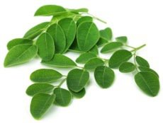 moringa-oleifera-leaves